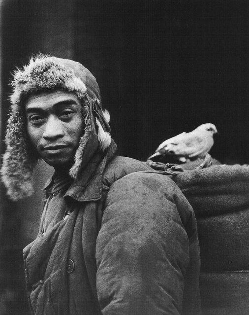 1948年11月, 蚌埠,停在士兵铺盖上的鸽子。 (In November 1948, Bengbu, stopped the soldiers bedding pigeons)