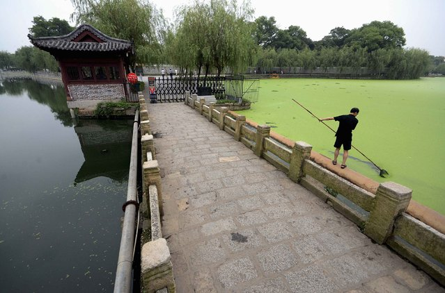 A worker scoops duckweeds from the surface of a lake in Nanchang, Jiangxi province August 30, 2014. The Chinese government will roll out a number of projects in areas where more spending is needed, such as air- and water-pollution prevention, and clean-energy projects including wind power, hydropower and nuclear plants, it said. (Photo by Reuters/Stringer)
