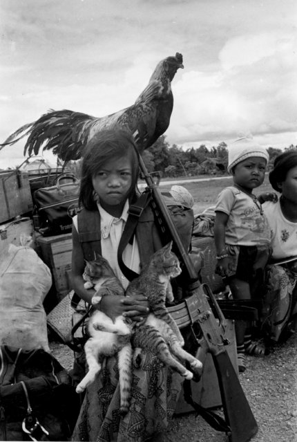A Cambodian girl stands with her rooster and two kittens next to her father's rifle at a marshalling point in Siem Reap Province, Cambodia, October 10, 1974. In Cambodia, family members often follow breadwinners into the combat zone. (Photo by Tea Kim Heang/AP Photo)