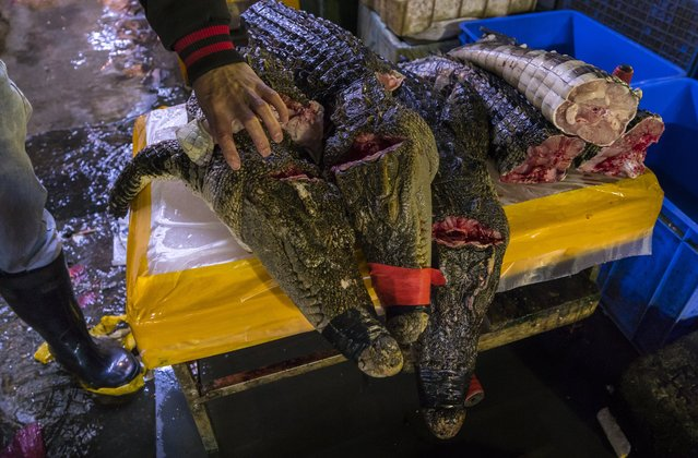 Crocodile meat parts stands on display on Huangsha Seafood Market in Guangzhou, Guandong Province, China, 20 January 2018. (Photo by Aleksandar Plavevski/EPA/EFE)