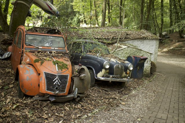 Three of Michael's decaying cars parked up on a cliff side with leaves and mud covering the bonnets in Neandertal Germany, September 11, 2016. (Photo by Christoph Hagen/Barcroft Images)