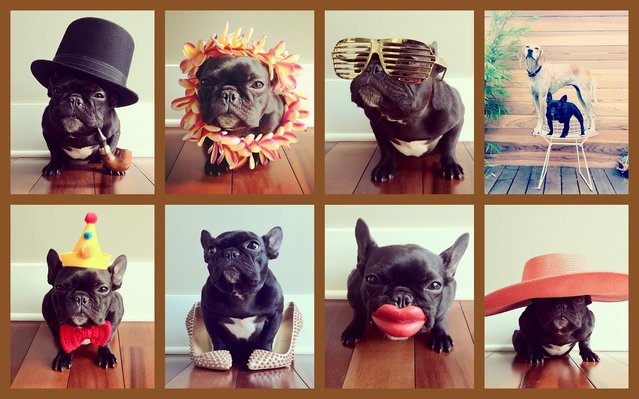 Sonya Yu – Witty Dog Portraits