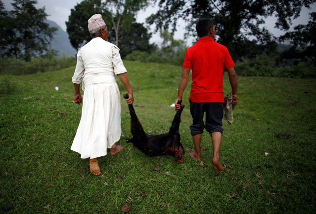 A sacrificed goat is carried away during of the Shikali festival at Khokana village in Lalitpur, Nepal October 7, 2016. (Photo by Navesh Chitrakar/Reuters)