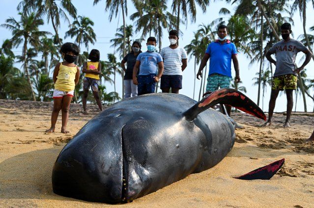 People look at a dead pilot whale on a beach in Panadura on November 3, 2020. Rescuers and volunteers were racing since November 2 to save about 100 pilot whales stranded on Sri Lanka's western coast in the island nation's biggest-ever mass beaching. (Photo by Lakruwan Wanniarachchi/AFP Photo)