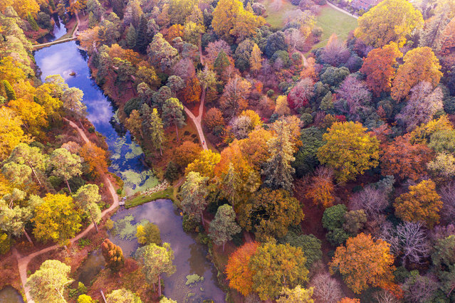 Visitors enjoy the stunning autumn colour at Leonardslee Lakes and Gardens, near Horsham in West Sussex on November 4, 2020. The overnight frosts this week are expected to end the display of vivid colours as we head into winter. Known as one of the 'Finest Woodland Gardens in England' Leonardslee is made up of 240-acres of Grade I Listed Gardens, parkland, lawns and forest areas, with an abundance of fascinating fauna as well as flora. You can see a rare colony of wallabies introduced in 1889, as well as several species of deer. (Photo by Oliver Dixon/Rex Features/Shutterstock)