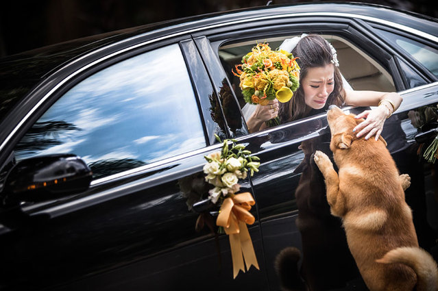 The bride in the car. 1st place – First dance. Zwolle, Netherlands. (Photo by Peter Can Der Lingen/Caters News)