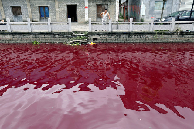 A man looks at a contaminated river in Cangnan county of Wenzhou, Zhejiang province, China July 24, 2014. (Photo by Reuters/Stringer)