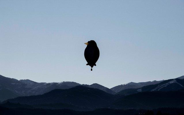 A hot air balloon shaped like a bird takes off from Mondovi, Italy during the 32nd Epiphany International Air Balloon Rally on Sunday, January 5, 2020. (Photo by Marco Alpozzi/LaPresse via AP Photo)