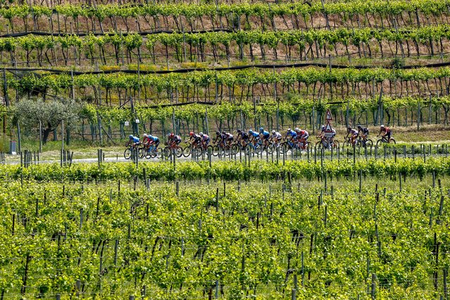 Riders of a breakaway group cycle through vineyards near Peschiera del Garda during the 18th stage of the Giro d'Italia 2021 cycling race, 231km between Rovereto and Stradella on May 27, 2021. (Photo by Luca Bettini/AFP Photo)