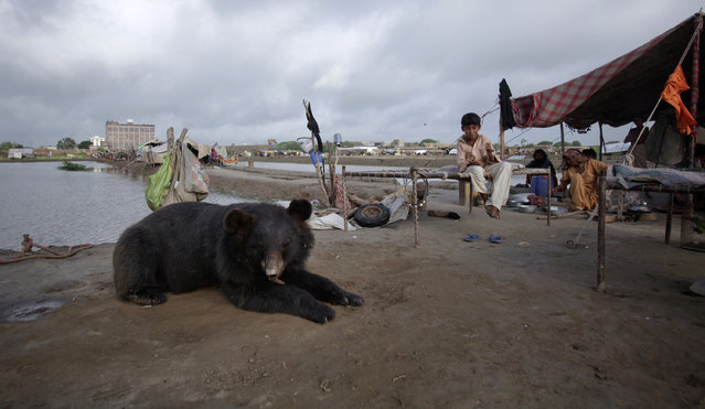 A pet bear sits among residents who escaped to higher ground from their flooded village in the Tando Allahyar district, Sindh province, Pakistan September 15, 2011. (Photo by Akhtar Soomro/Reuters)