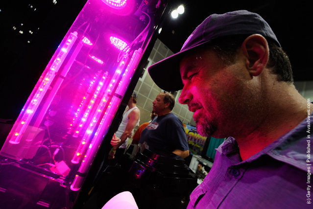 HempCon 2011 Medical Marijuana Expo, hydroponic grow with LED lights used for indoor gardening