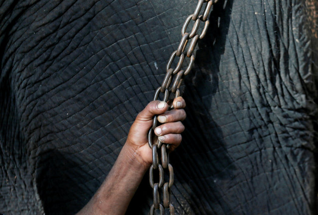 A mahout holds the chain of the temple's elephant during a ceremony as part of the Sinhala, Hindu and Tamil new year celebrations in Colombo, Sri Lanka on April 17, 2019. (Photo by Dinuka Liyanawatte/Reuters)