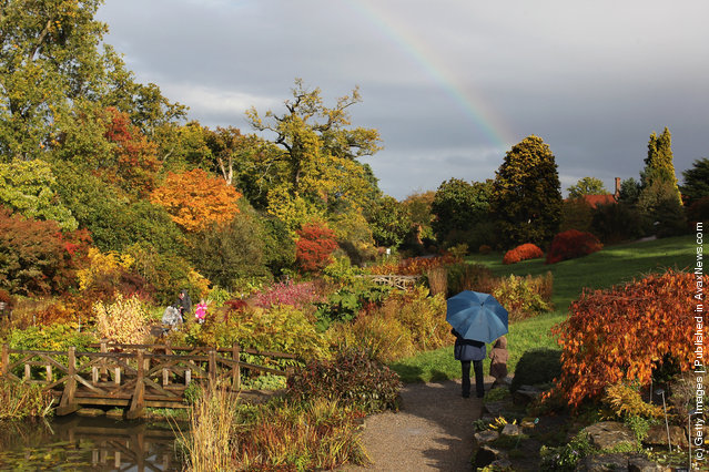 Tree leaves displaying their autumn colours at the Royal Horticultural Society Garden Wisley