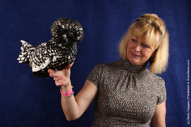 Linda Rupniak, from Northampton, holds her 9 month old Silver Laced Poland Pullet