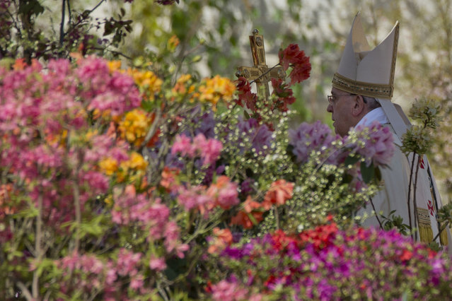 Flowers from the Netherlands decorate St. Peter's Square as Pope Francis arrives to celebrate an Easter Mass in St. Peter's Square at the the Vatican, Sunday, April 20, 2014. Francis is celebrating Christianity's most joyous day, Easter Sunday, under sunny skies in St. Peter's. (Photo by Andrew Medichini/AP Photo)