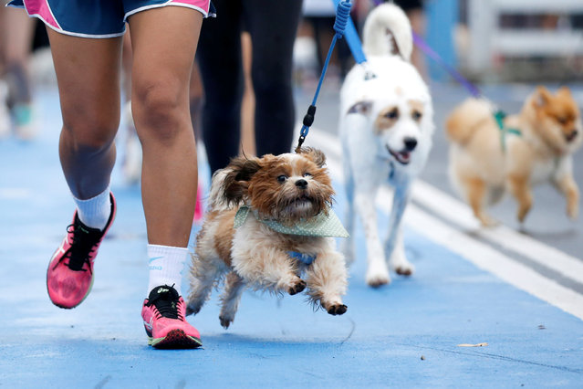 People run with their pets during a mini-marathon for dogs in Bangkok, Thailand May 7, 2017. (Photo by Jorge Silva/Reuters)