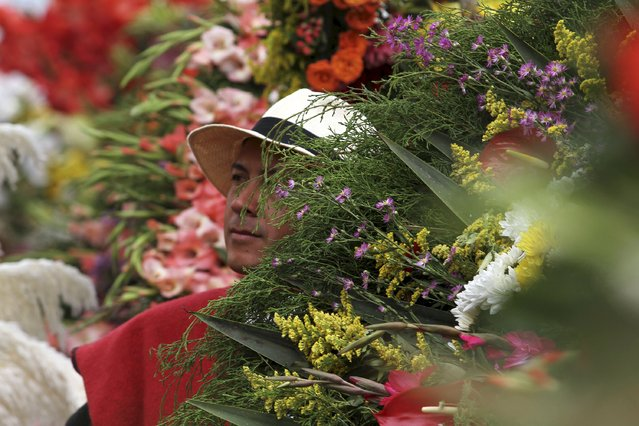 A flower grower, known as a silletero, looks at flower arrangements as he participates in the annual flower parade in Medellin, Colombia, August 9, 2015. (Photo by Fredy Builes/Reuters)