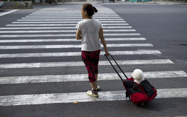 A woman walks with her pet dog on a street in Shanghai August 7, 2014. (Photo by Aly Song/Reuters)