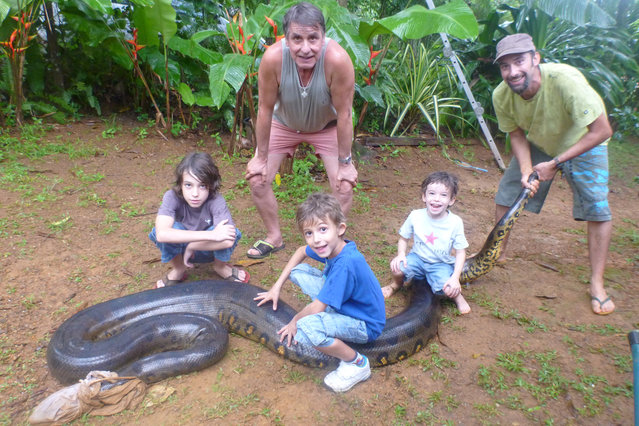 (L-R) Noam Bascoules, Michel Bascoules, Solal Bascoules, Mano Bascoules and Sebastien Bascoules pose with a 17ft anaconda which ate a pet dog is blindfolded with a t-shirt in Montsinery, French Guiana. (Photo by Sebastien Bascoules/Barcroft Media/ABACAPress)