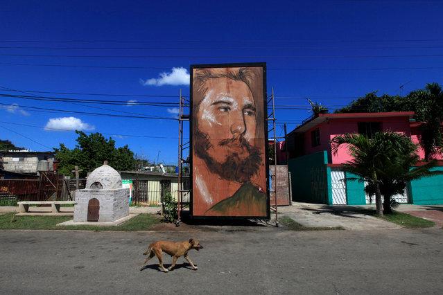 A dog walks past a painting depicting Cuba's former President Fidel Castro by Cuban artist Kcho in Havana, Cuba, August 13, 2016. (Photo by Enrique de la Osa/Reuters)