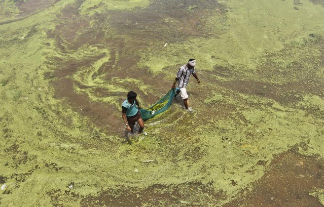 Workers carry algae as they clean the polluted waters of river Sabarmati on World Environment Day in Ahmedabad June 5, 2013. (Photo by Amit Dave/Reuters)
