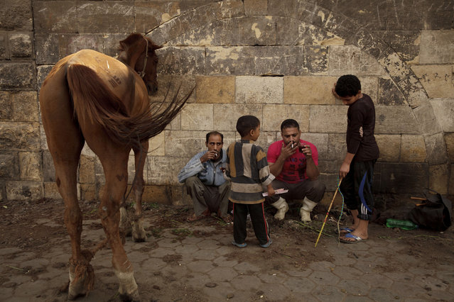 In this Saturday, March 8, 2014 photo, Mohamed Mahmoud, left, takes a break with his son Mustafa, center, and a horse owner and his son at his makeshift animal barber shop in the shadow of the medieval aqueduct in Cairo, Egypt. (Photo by Maya Alleruzzo/AP Photo)