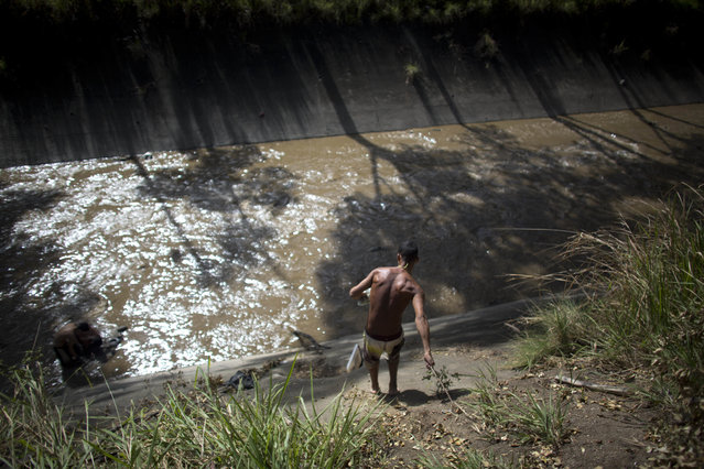 In this December 5, 2017 photo, a man holds on to a branch to lower himself down the concrete bank to the polluted Guaire River where he will search for anything valuable he can sell, in Caracas, Venezuela. Most of the scavengers stream down from hillside barrios, and from afar, they seem to play in the river, but in reality their desperation to earn a living is what pushes them to risk entering the toxic, sewage water. (Photo by Ariana Cubillos/AP Photo)
