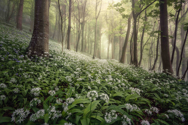 "Woolland Woods, Dorset. Landscape photographer of the year 2020. ""Taken in spring of 2018 in a wooded area close to Milborne St Andrew in Dorset, this was the third visit to the area in a matter of days. On the previous days, both devoid of morning mists, the light had been harsh and unappealing but the third day delivered stunning conditions with mist swirling through the trees. The low shooting position allowed more emphasis to be placed on the wild garlic and pathway"". (Photo by Chris Frost/UK Landscape Photographer of the Year 2020)"