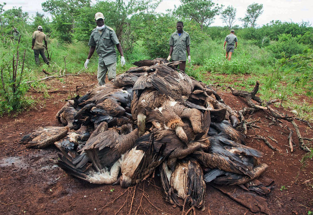 In this photo provided by the Endangered Wildlife Trust and taken on Sunday, February 25, 2018, the corpses of poisoned vultures are piled up in the Mbashene communal area in Mozambique. Conservationists say at least 87 critically endangered vultures have died after consuming poison planted in the carcass of a poached elephant. (Photo by Andre Botha/Endangered Wildlife Trust Photo via AP Photo)