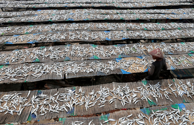 An Indonesian fisherman checks his salted fish during a drying session in Jakarta, Indonesia, 17 October 2016. According to the statistics bureau, Indonesia's annual inflation in September rose by 3.07 percent from last year. (Photo by Adi Weda/EPA)