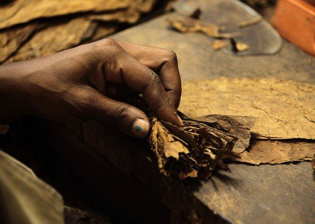 "A woman rolls a cigar at the Cohiba cigar factory ""El Laguito"" in Havana September 10, 2012. (Photo by Desmond Boylan/Reuters)"