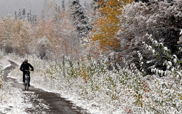 A bicyclist rides along the Sheep Creek Road bike trail as the first snow of the season continues to fall around Fairbanks, Alaska, on September 18, 2013. (Photo by Eric Engman/Fairbanks Daily News-Miner)