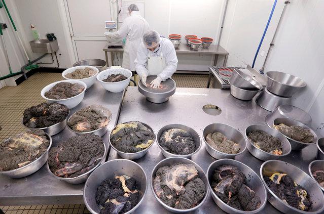 "Employees prepare caviar at the caviar fish farming company ""Sturgeon"", the leading French producer, in Saint-Genis-de-Saintonge, France, November 8, 2016. (Photo by Regis Duvignau/Reuters)"