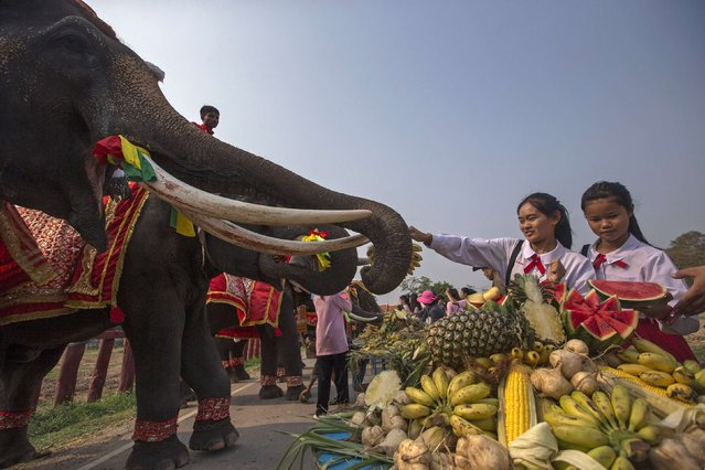 Students feed fruit to an elephant during Thailand's National Elephant Day in the ancient Thai capital Ayutthaya March 13, 2015. Thais honoured the elephant on Friday with special fruits and Buddhist ceremonies across the country to pay homage to their national animal. (Photo by Athit Perawongmetha/Reuters)