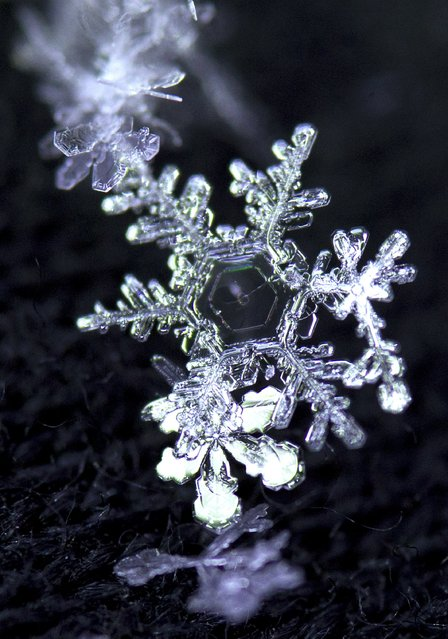 A snowflake reflects a spectrum of light after falling in Knoxville on Tuesday, January 28, 2014. Snow flurries expected to continue throughout the day, (Photo by Adam Lau/News Sentinel)