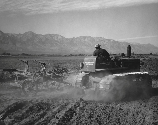 Benji Iguchi driving tractor in a field at the Manzanar War Relocation Center in California, in this 1943 handout photo. (Photo by Courtesy Ansel Adams/Library of Congress, Prints and Photographs Division/Reuters)