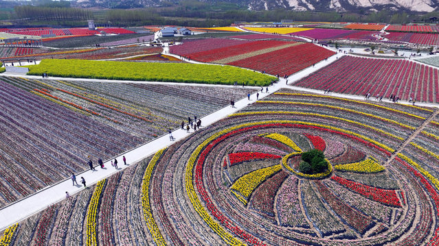 Visitors walk through a tulip display in Chaya Mountain, Suiping County in Zhumadian, Henan Province of China on March 31, 2016. (Photo by VCG/VCG via Getty Images)