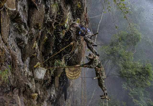 Chinese ethnic Lisu honey hunters Dong Haifa, top, and Mi Qiaoyun stand on a makeshift rope ladder as they are surrounded by bees as they work together gathering wild cliff honey from hives in a gorge on May 11, 2019 near Mangshi, in Dehong prefecture, Yunnan province China. (Photo by Kevin Frayer/Getty Images)