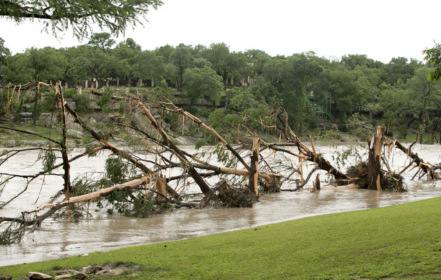 Destroyed trees lay on the banks of the Blanco River in Wimberley, Texas, after the flood on Sunday May 24, 2015. (Photo by Jay Janner/Austin American-Statesman via AP Photo)
