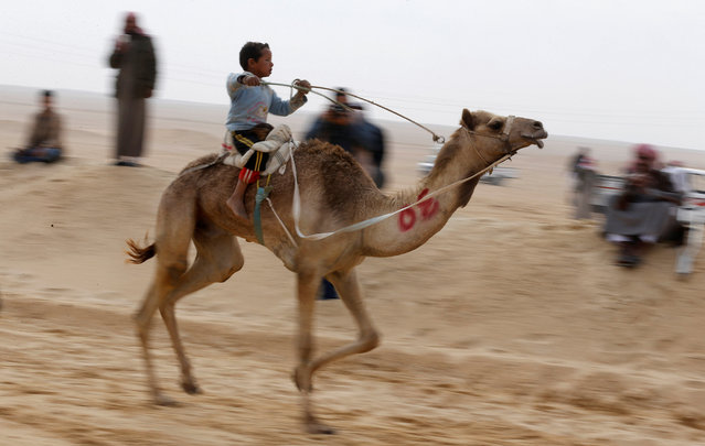 A child jockey, competes on his mount during the opening of the International Camel Racing festival at the Sarabium desert in Ismailia, Egypt, March 21, 2017. (Photo by Amr Abdallah Dalsh/Reuters)