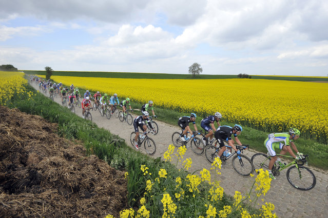 The pack in action during the 112th Paris Roubaix cycling race, in Roubaix, France, 13 April 2014. (Photo by Nicolas Bouvy/EPA)