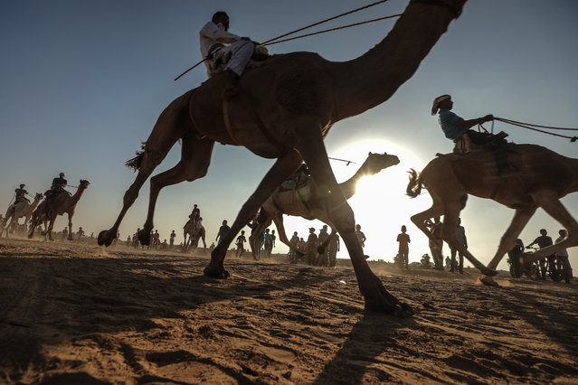 Jockeys compete in a camel race organized by the Federation of Palestinian Camel Races and the Olympic Committee at the airport runway of Gaza Airport which was completely destroyed by the Israeli attacks, in Gaza on October 20, 2019. (Photo by Ali Jadallah/Anadolu Agency via Getty Images)