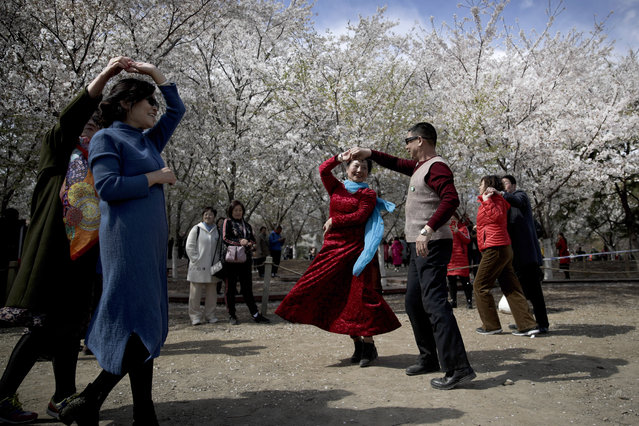 In this March 30, 2019, file photo Chinese people enjoy a social dance near cherry blossoms at the Yuyuantan Park during a spring festival in Beijing. (Photo by Andy Wong/AP Photo/File)