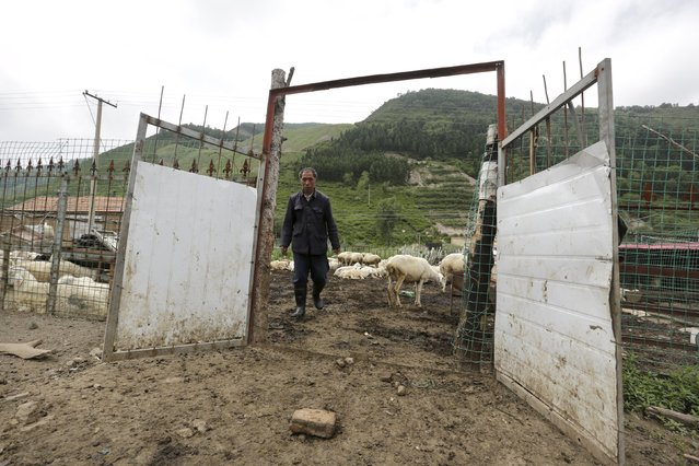 A local villager walks out of his sheepfold near Dolomiti Mountain Resort in Chongli county of Zhangjiakou, jointly bidding to host the 2022 Winter Olympic Games with capital Beijing, July 31, 2015. (Photo by Jason Lee/Reuters)
