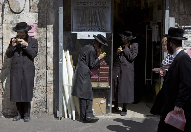 "Ultra-Orthodox Jews inspect etrogs, or citrons, outside a shop in the Mea Shearim neighbourhood in Jerusalem, 07 October 2014, as they look to purchase an unblemished fruit ahead of the holiday of Sukkot. The etrog is one of the ""four species"" used by religious Jews during the week-long Autumn harvest holiday of Sukkot, beginning at sunset on 08 October. (Photo by Jim Hollander/EPA)"