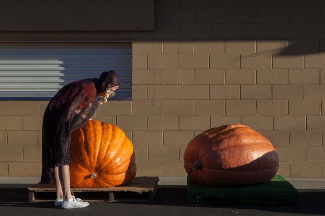 Catherine Walker, 13, inspects her pumpkin at the 41st Annual Safeway World Championship Pumpkin Weigh-Off  in Half Moon Bay, Calif., Monday, October 13, 2014. Walker grew her pumpkin specifically for the prettiest pumpkin category but it still weighed in at just over 300 pounds. (Photo by Alex Washburn/AP Photo)