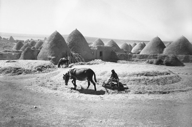 Photo shows construction of a house in Syria, on October 10, 1938 is a simple and a cheap matter. Like these two fellows, you hitch up the mules and plough up enough earth, mix in some straw and hollow it out after it's stacked in a mound a conical hut like those in the background is the result. (Photo by AP Photo)