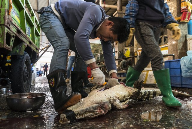 A man cleans purchased crocodile on Huangsha Seafood Market in Guangzhou, Guandong Province, China, 22 January 2018. (Photo by Aleksandar Plavevski/EPA/EFE)