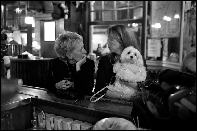 A dog feeling a little left out of the conversation. La Brasserie de l'Ile St. Louis, Paris. (Photo and comment by Peter Turnley)