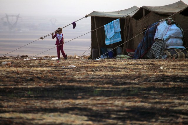 A Syrian girl that fled recent fighting in Aleppo walks near her tent in the southern countryside of Aleppo, Syria October 19, 2015. (Photo by Ammar Abdullah/Reuters)
